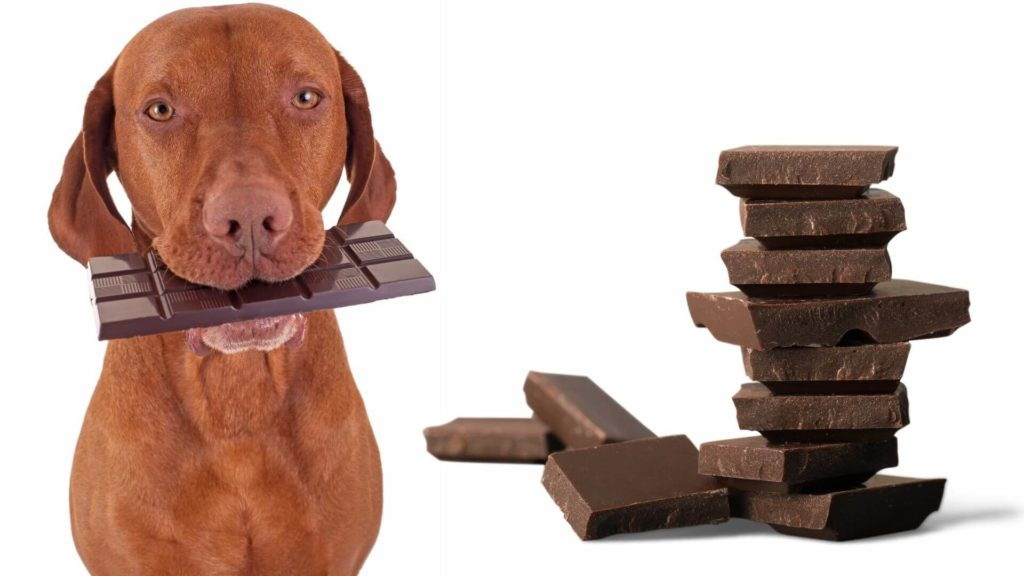 Is dark chocolate good for dogs